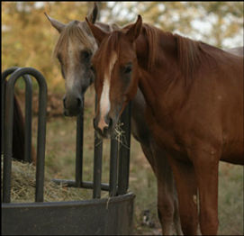 Vitamin and Mineral Supplements for Horses