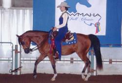 National Level Arabian show horse