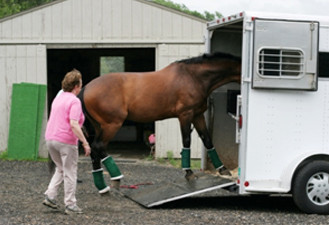 Horse being loaded into a trailer