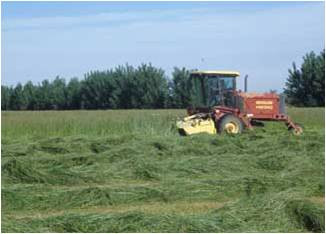 Tractor in a field cutting hay