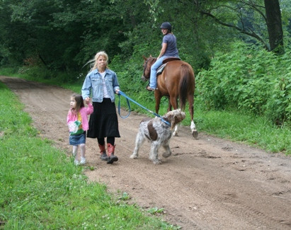 Horse and rider crossing paths with a dog
