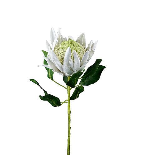 Mr Plant, kunstig protea