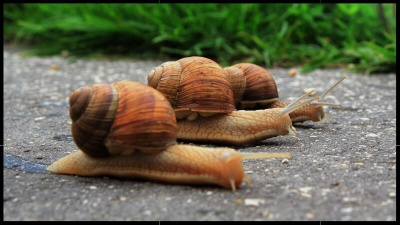 speed-slow-snails-ss-1920-800x450_edited