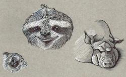 Random-Animals