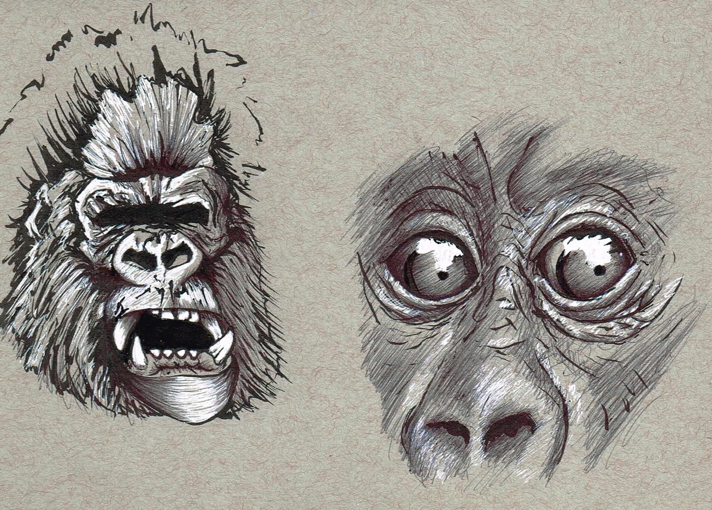 Random-Gorillas