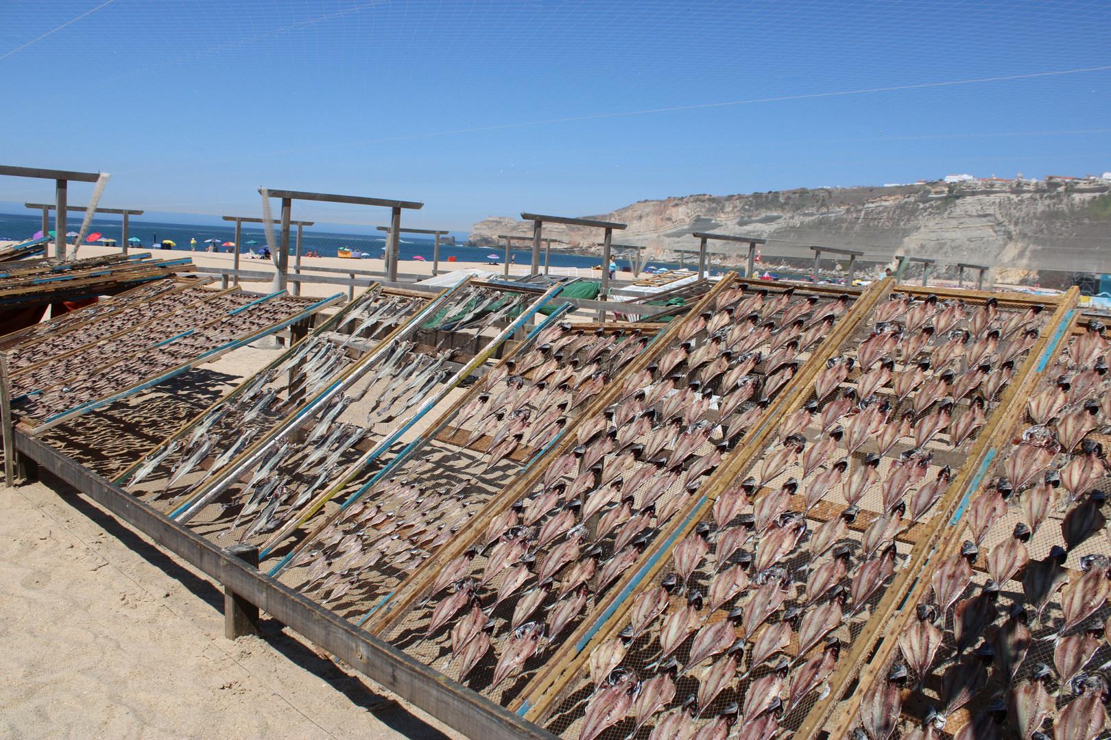 Dried fish on racks Nazare Portugal