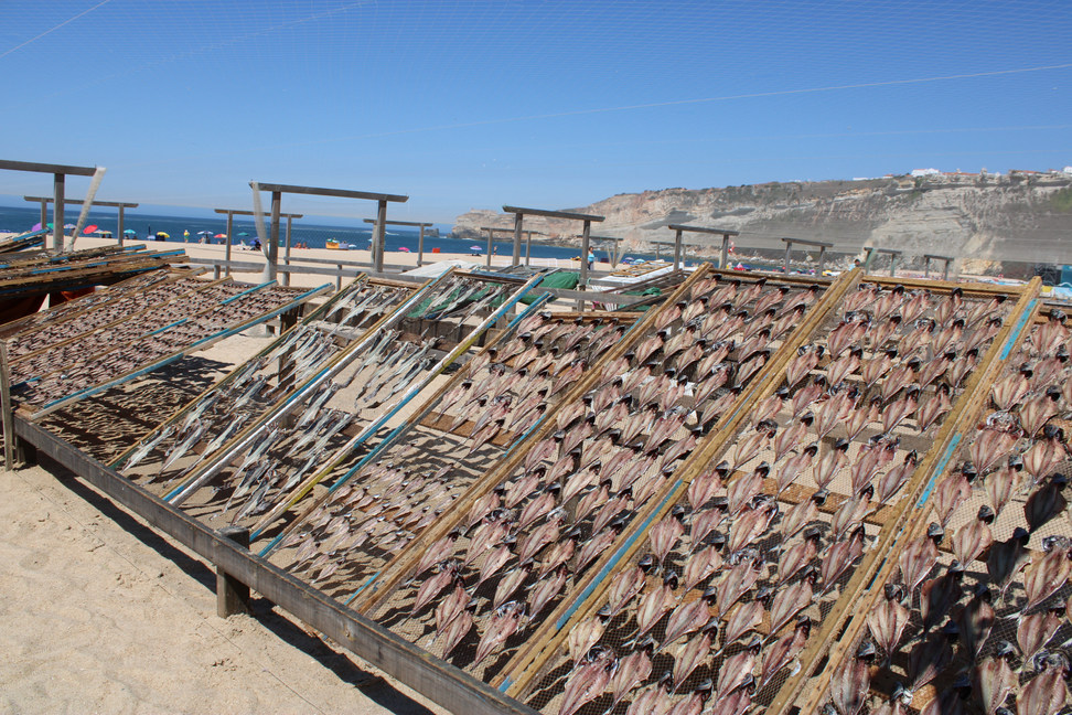 Poisson séché sur des racks Nazare Portugal
