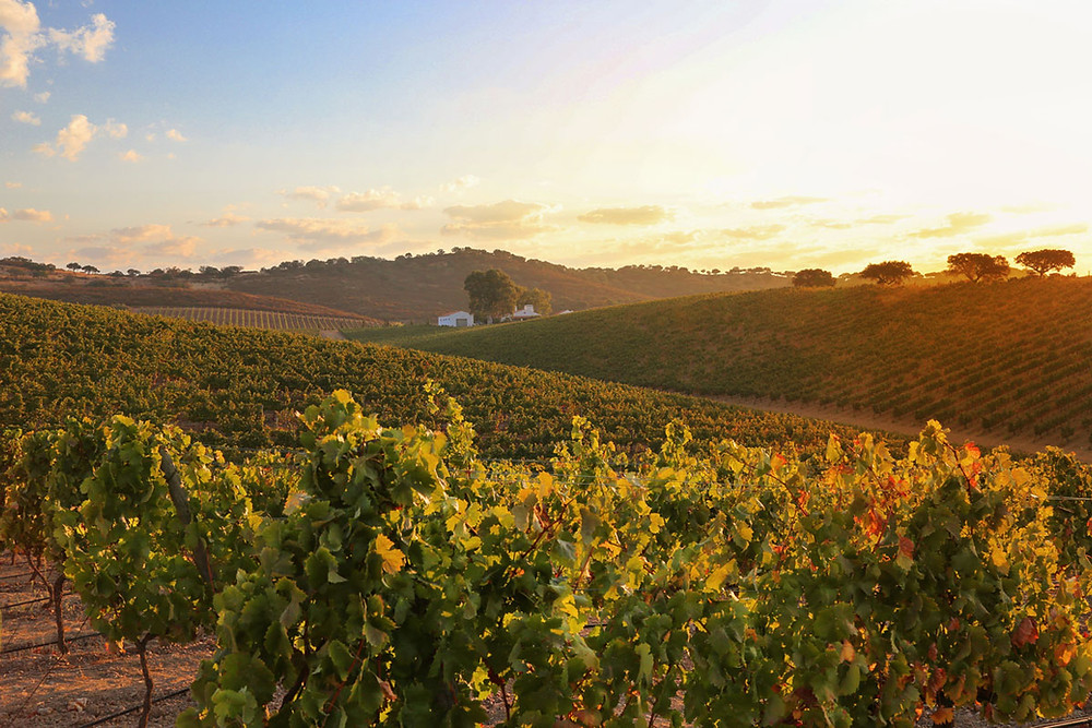 Sunset over vineyard and hills in Alentejo Portugal