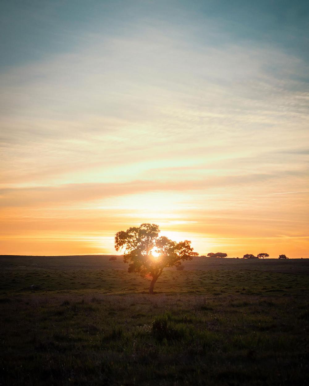 Sunset over cork tree Alentejo Portugal
