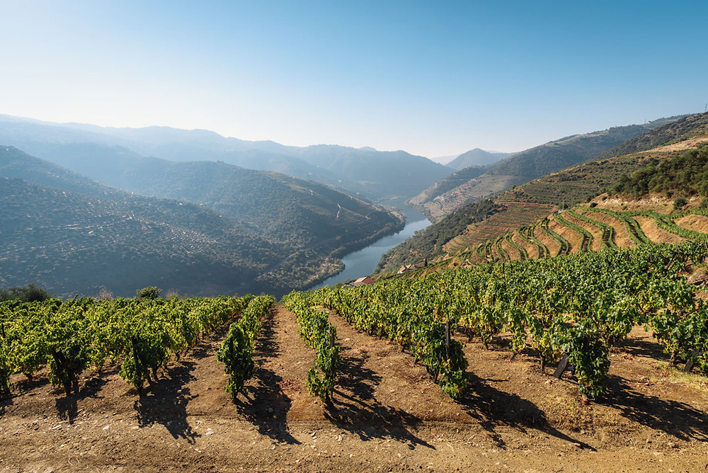 Douro is the world's oldest demarcated wine region