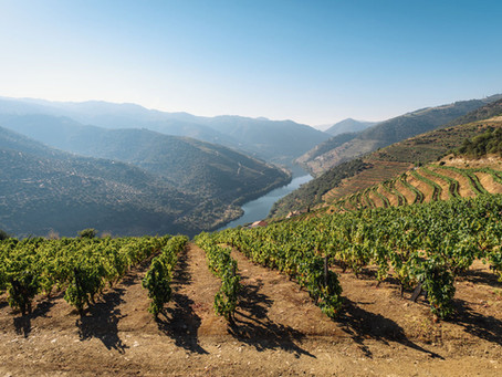 Everything you always wanted to know about wine in Portugal