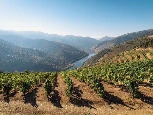 Alles wat je altijd al wilde weten over wijn in Portugal