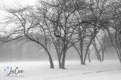LaCoe Photography-2