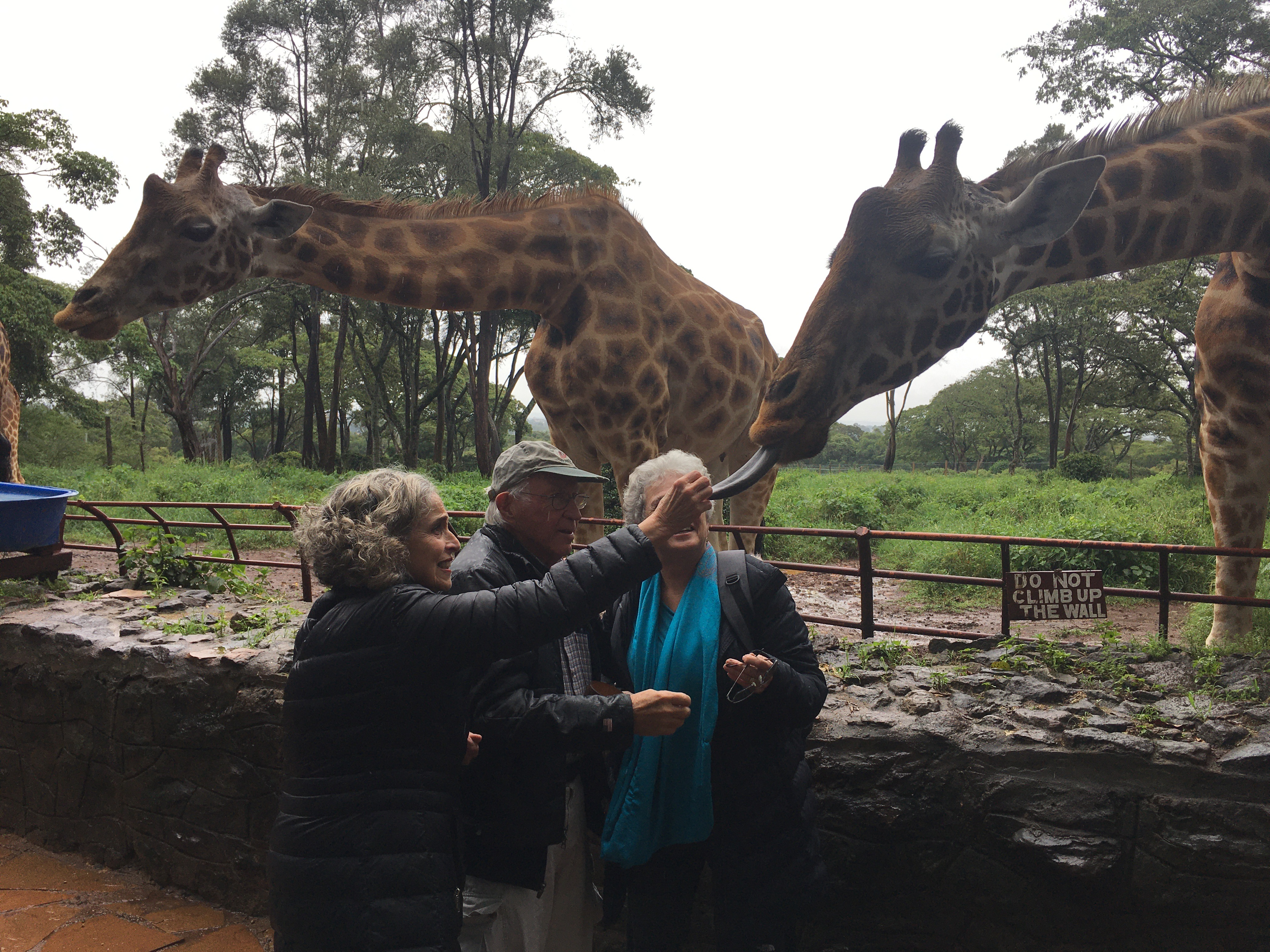 DARAJA-GiraffesPersonal