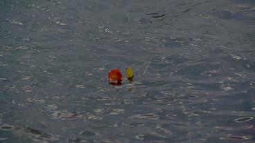 flores rio flores del alma Mario Boffil Julian Zini chamame chamameceros tragedia de Bella Vista Corrientes accidente en el río Paraná