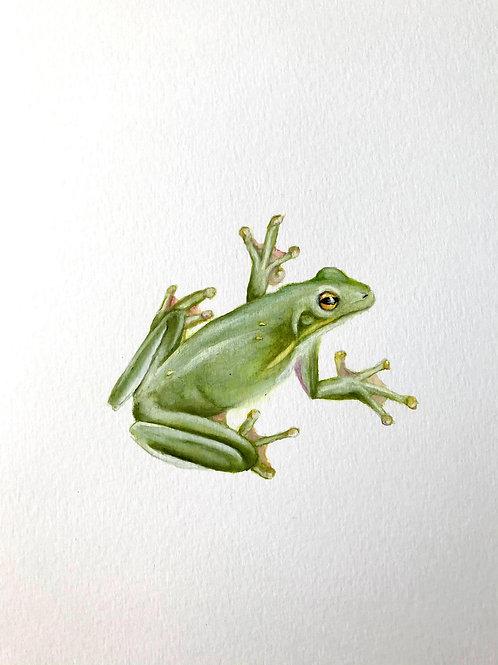Little Green Tree Frog
