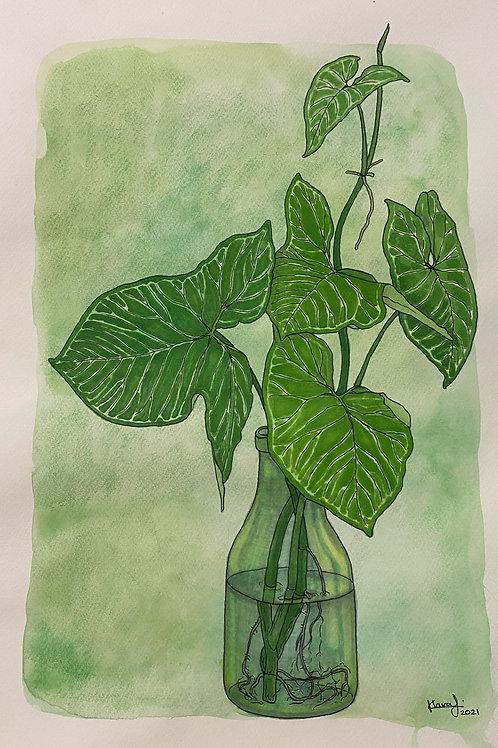 Arrowhead in a Vase