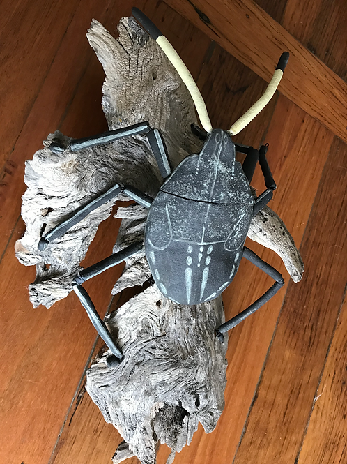 The Shield Bug