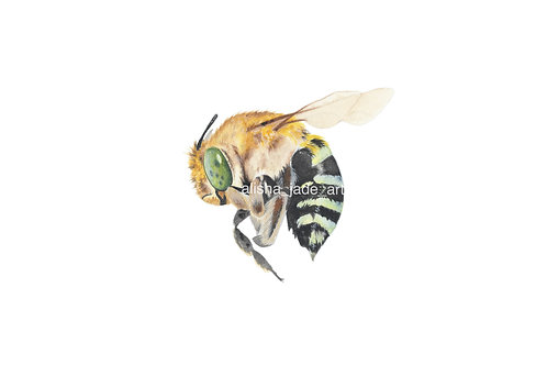 Blue Banded Bee - A5 Size