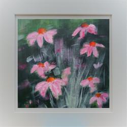 Echinacea in Frame 3b