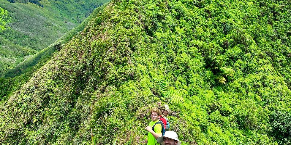 Hike & Seed @ Pia Valley (INTERMEDIATE LEVEL HIKE)