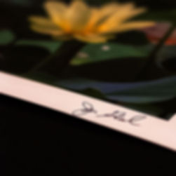 Lotus-print-signed-archival-paper-exampl