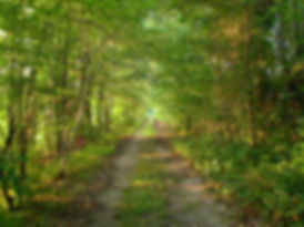 The road less traveled -gravel road nature photography