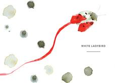 White Ladybird