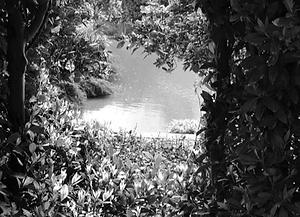 hideaway-946941_960_720_edited_edited_ed