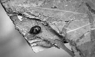 BioVide_Takuma_insect.jpg