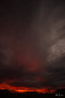 Copyright©RicardoLeon_2020__MG_3487