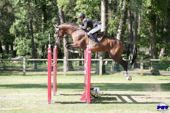 Quaprice for ever || Paradiziak Stallion
