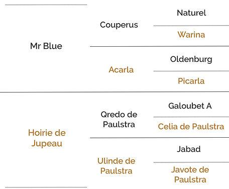 Origines Quoirie Blue.jpg