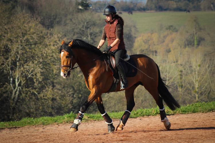 Botero LH   PRE Stallion