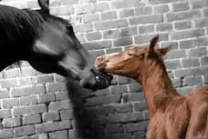 Foal NB.jpg