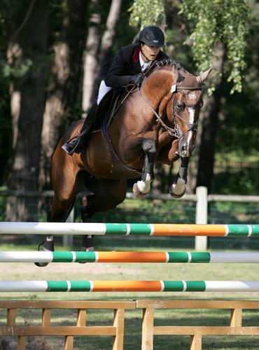 Quaprice for ever    Paradiziak Stallion