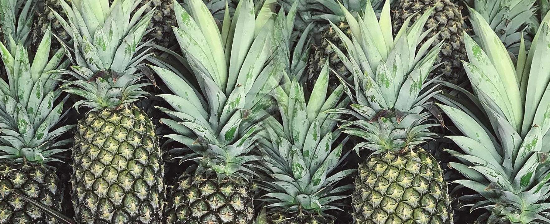 PLANT BASEDLIFE