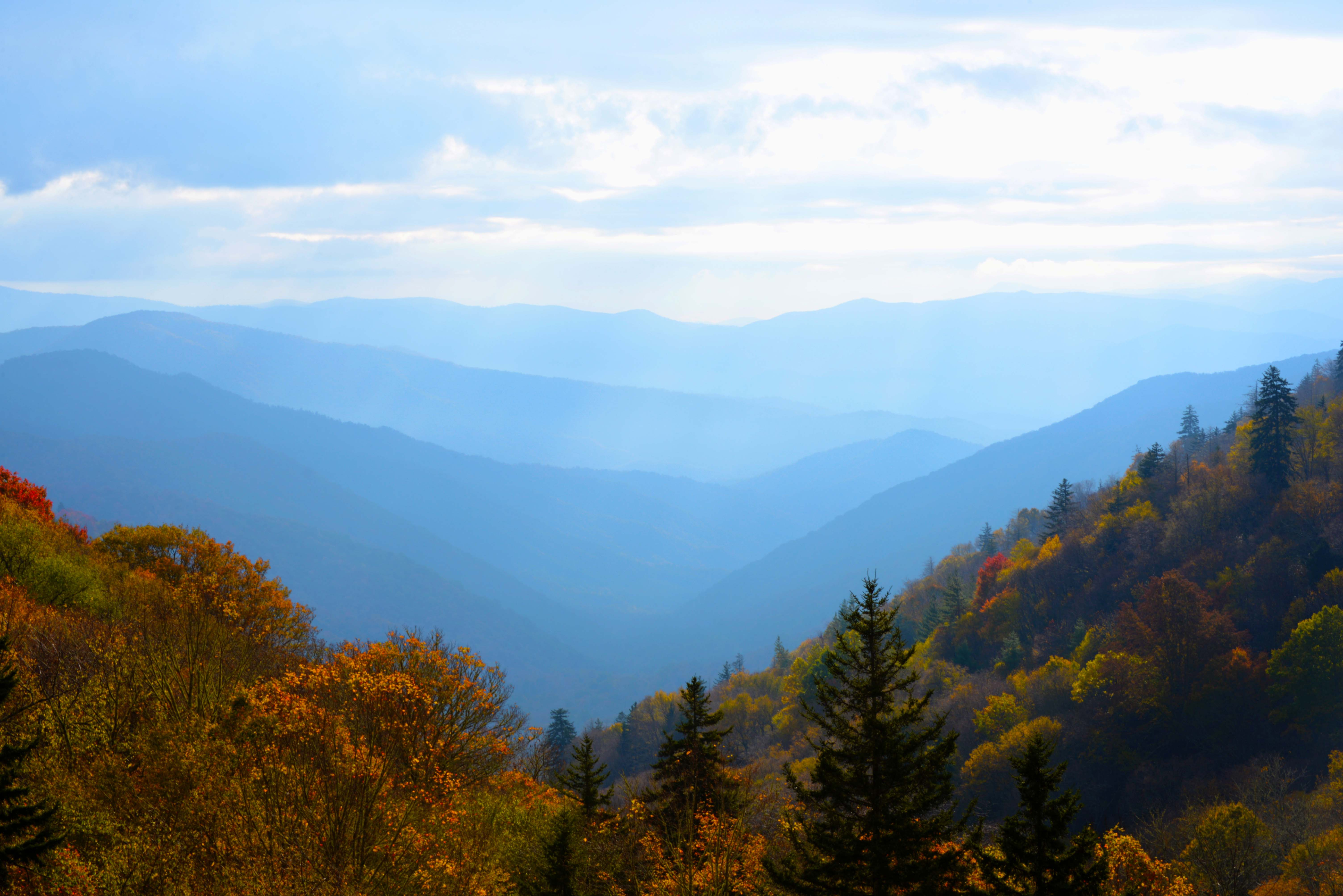 Great Smoky blue in fall
