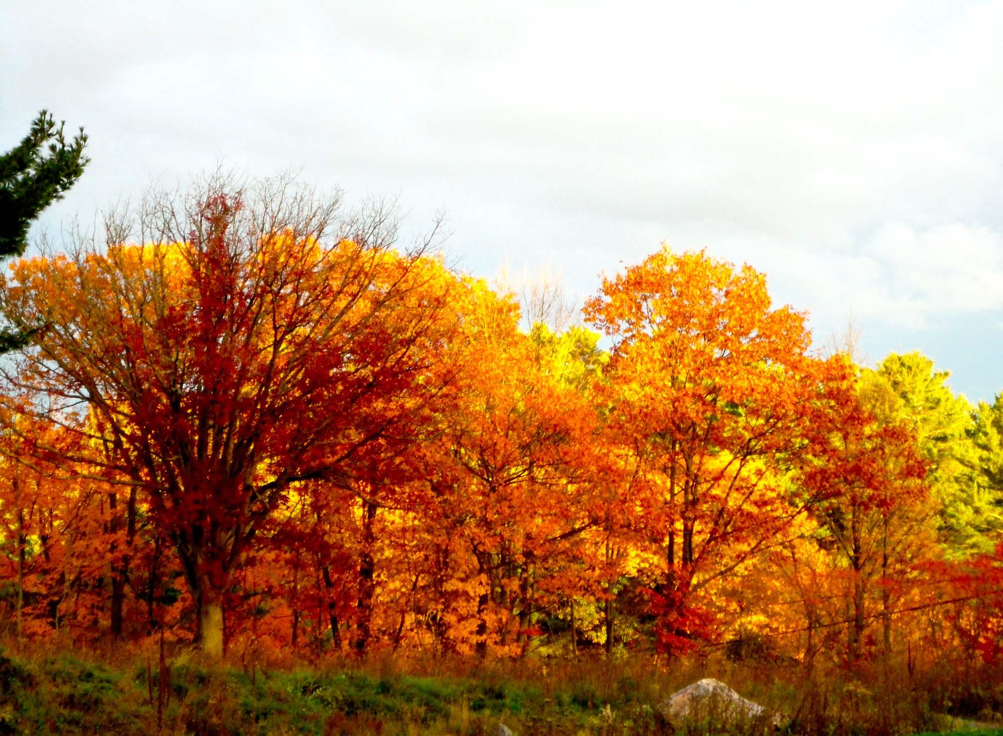 Burning fall tree