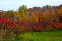 Tree fall colors Muskoka