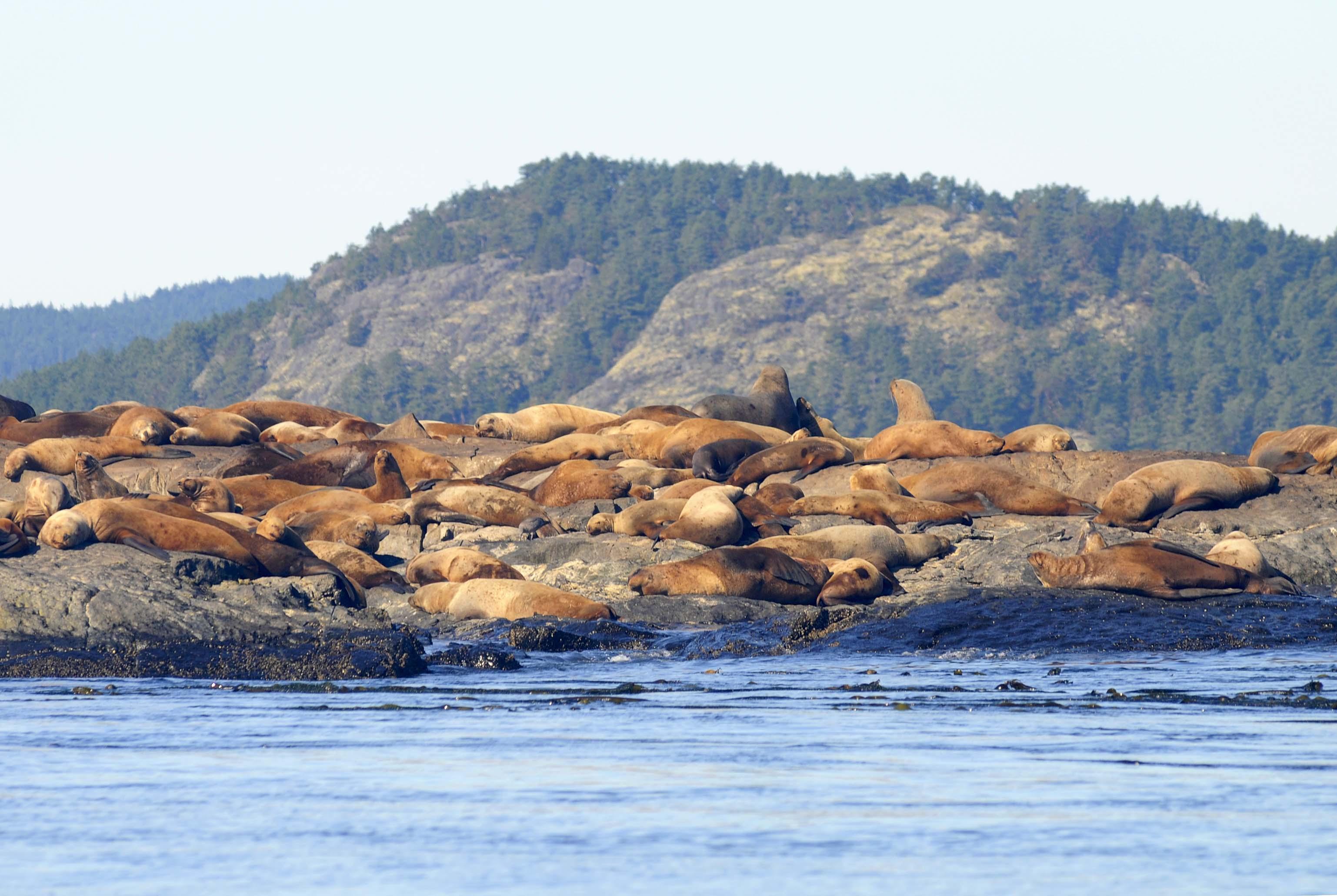seals off of victoria