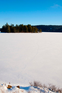 snow covered lake with deer tracks
