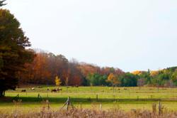 Muskoka farm colors