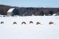 Muskoka snow farm scene