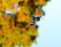 aligator in fall