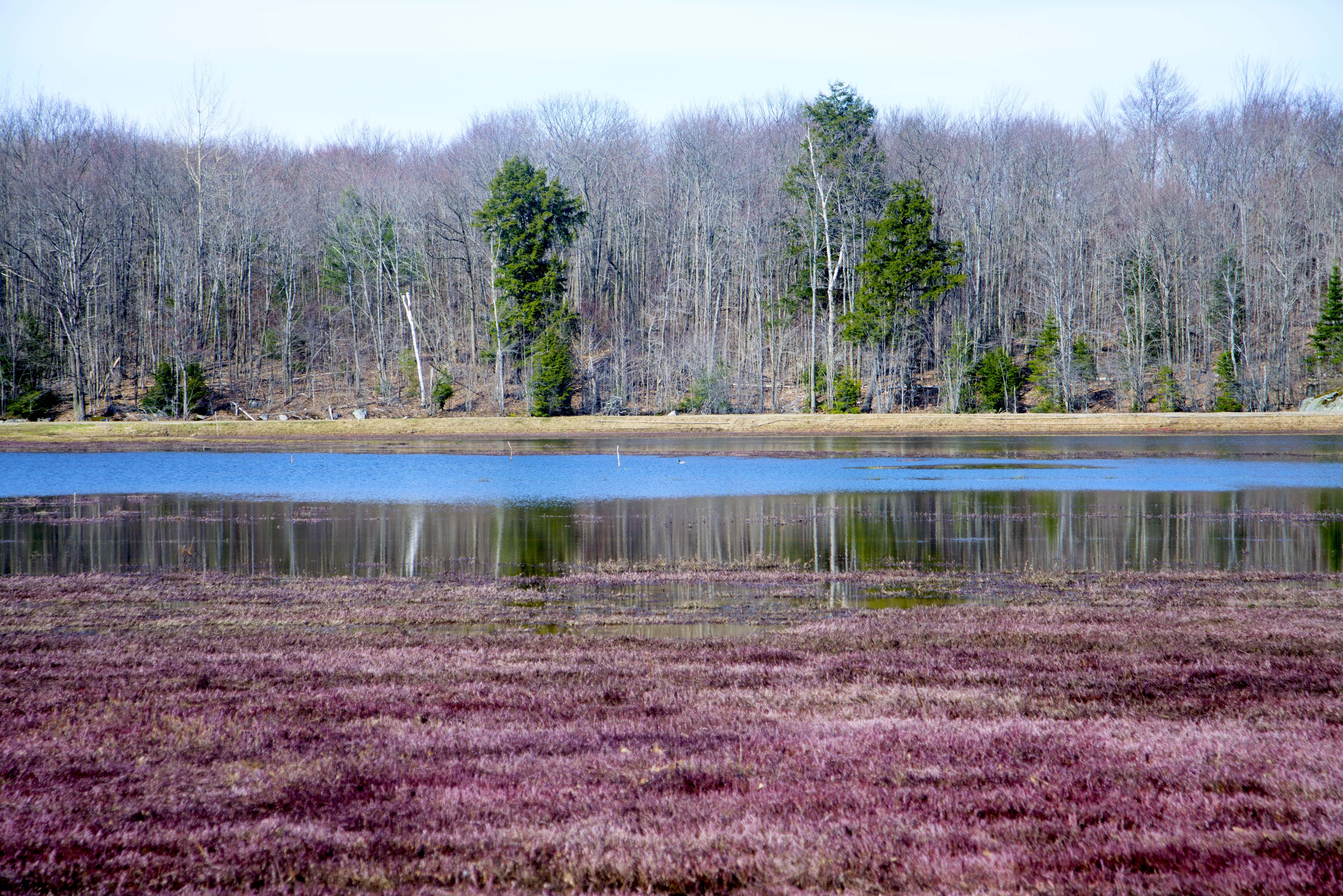 Cranberry Marsh Bala