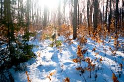 color in snow muskoka