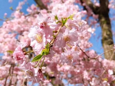 もう〜春🌸✨