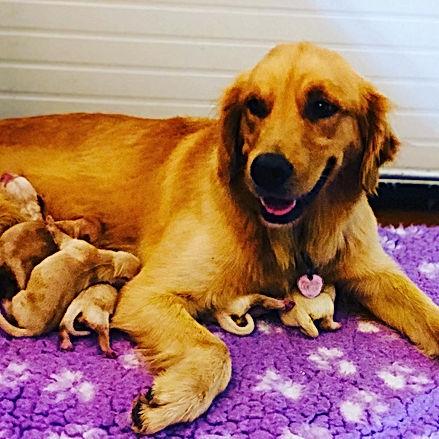 Seven puppies .JPG