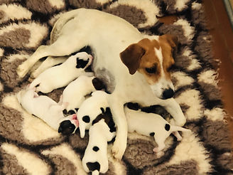 jolie 2021 puppies bb_edited.jpg